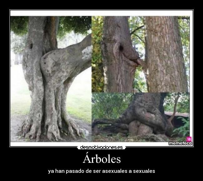 Arboles reproduccion asexual en