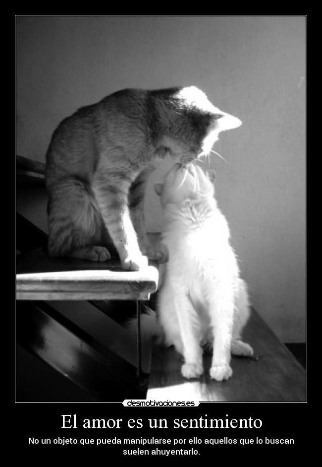 carteles amor gatos besandose principal divertitags amore samm miss you pelea love desmotivaciones