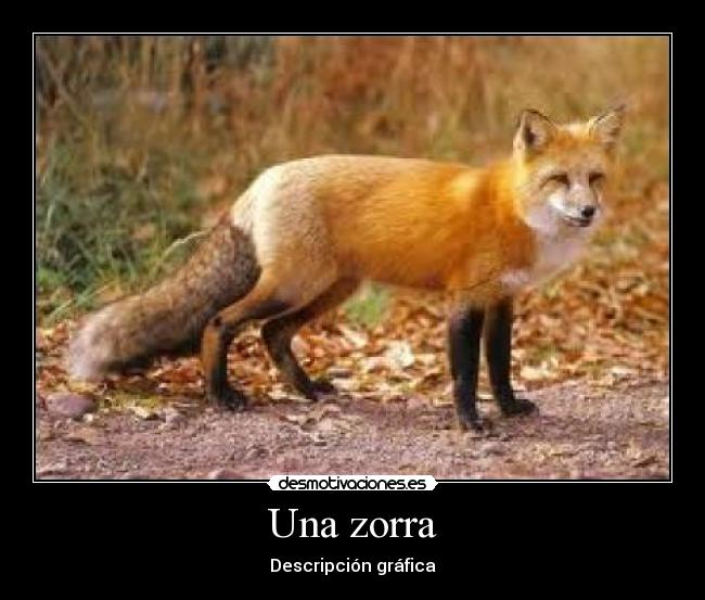 zorra de mujer: