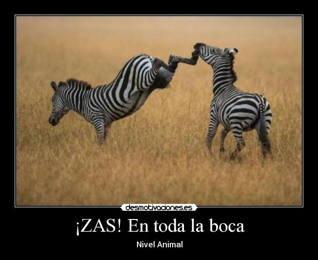 ¡ZAS! En toda la boca - Nivel Animal