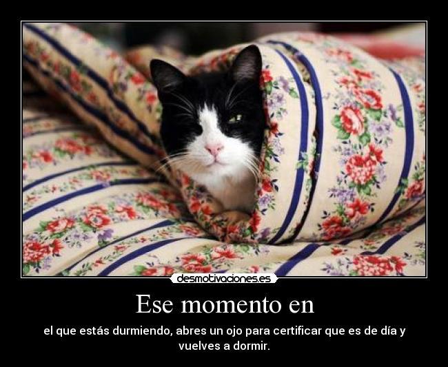 Ese momento en - el que estás durmiendo, abres un ojo para certificar que es de día y vuelves a dormir.