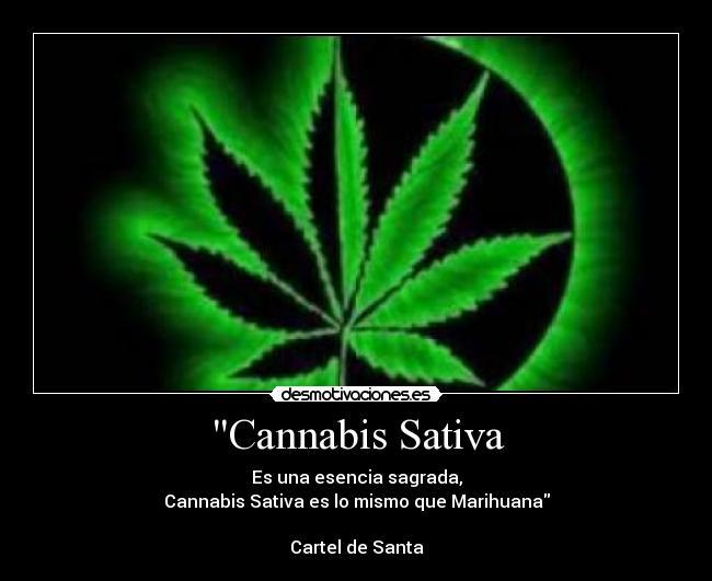 Descargar musica del cartel de santa marihuana