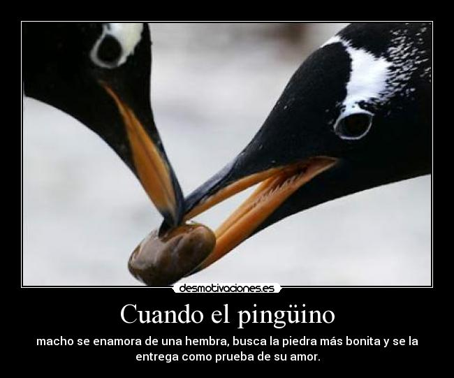 Te Amo Escrito En Pluma En La Arena Imagen De Archivo: ANIMALES : PINGÜINO