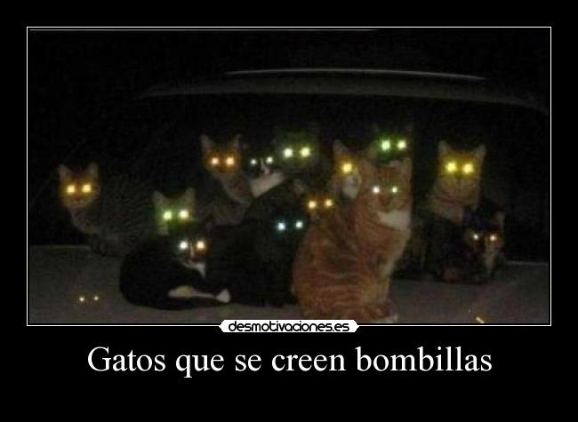 Gatos que se creen bombillas -