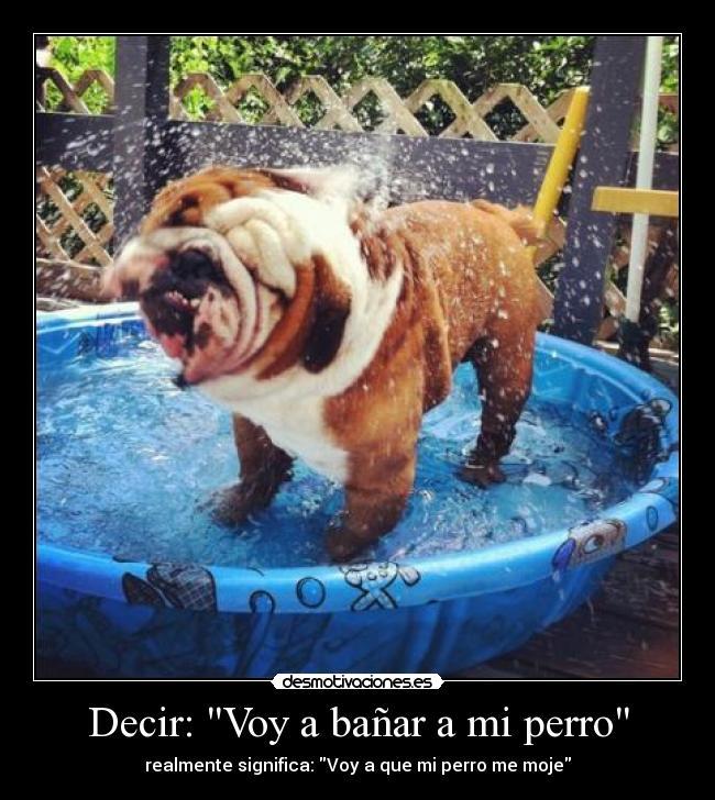 Domestic wild animals cada cu nto debo ba ar a mi perro - Cada cuanto banar a un perro ...