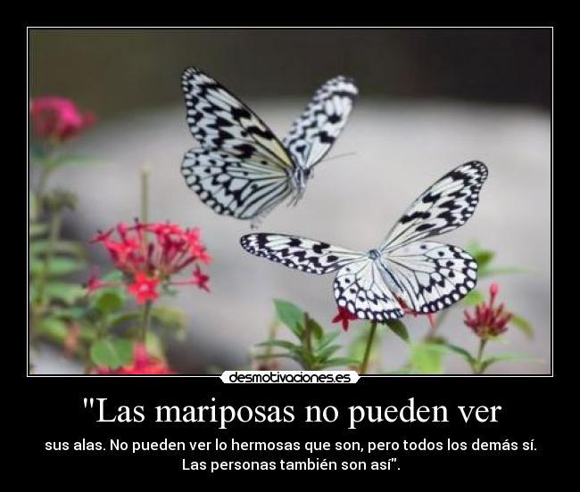 Las mariposas no pueden ver - desmotivaciones.