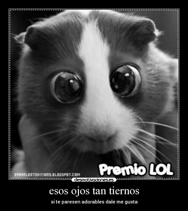 Imagenes ojitos tiernos - Imagui