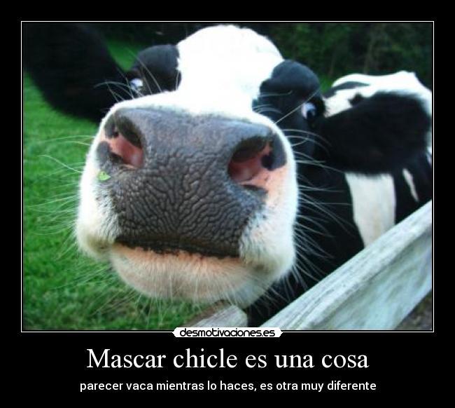 http://img.desmotivaciones.es/201212/Dairycowspict1.jpg