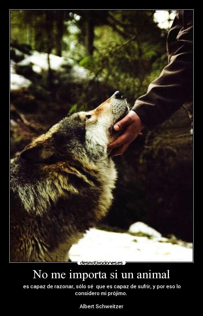 animal animales amor