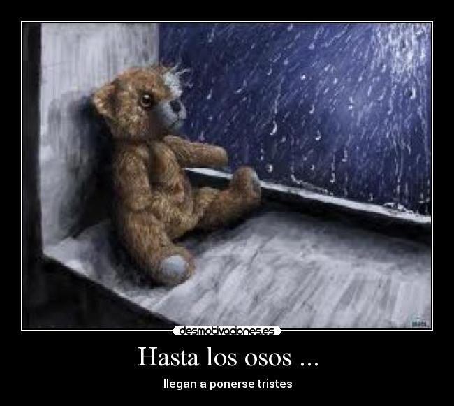 Hasta los osos ... | Desmotivaciones