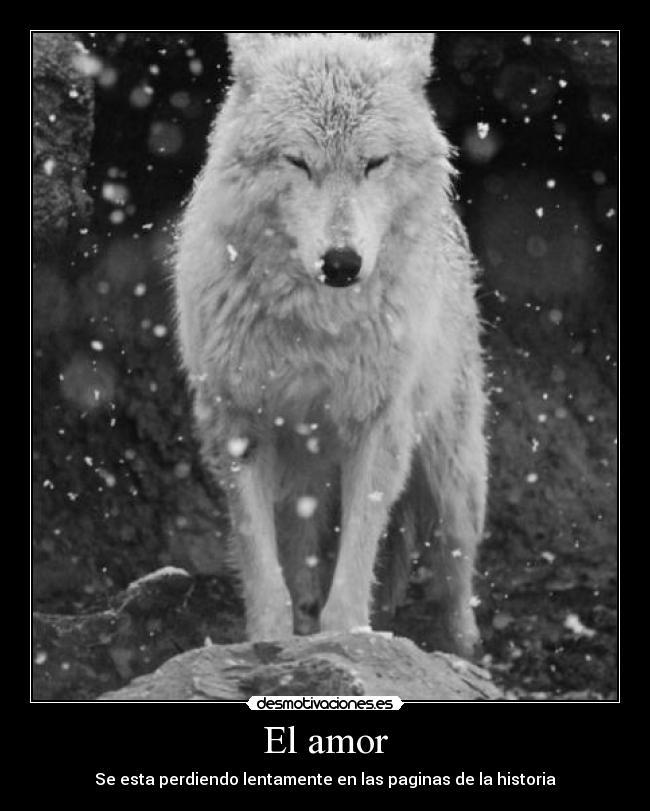 Одинокий Волк Знакомства