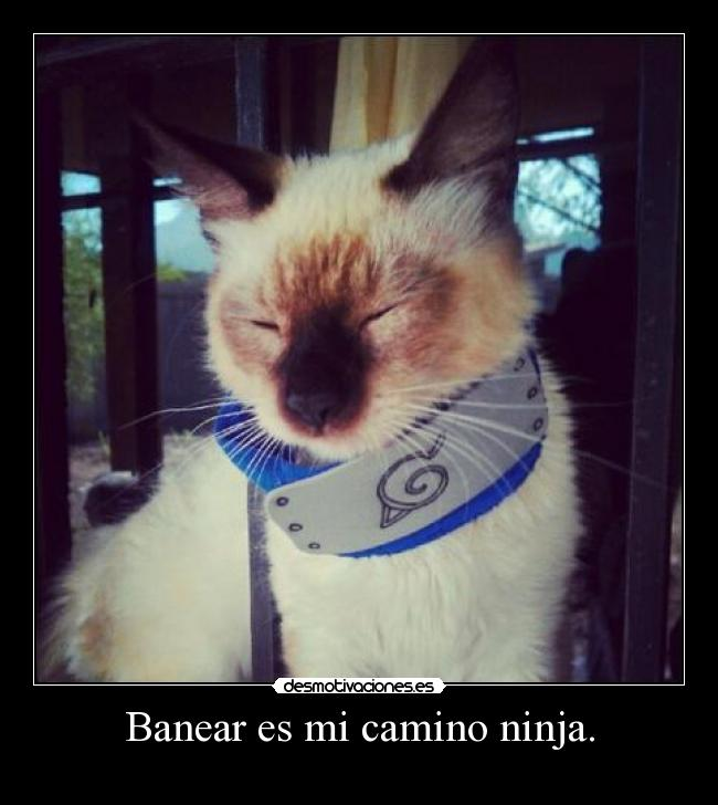 Banear es mi camino ninja. - 