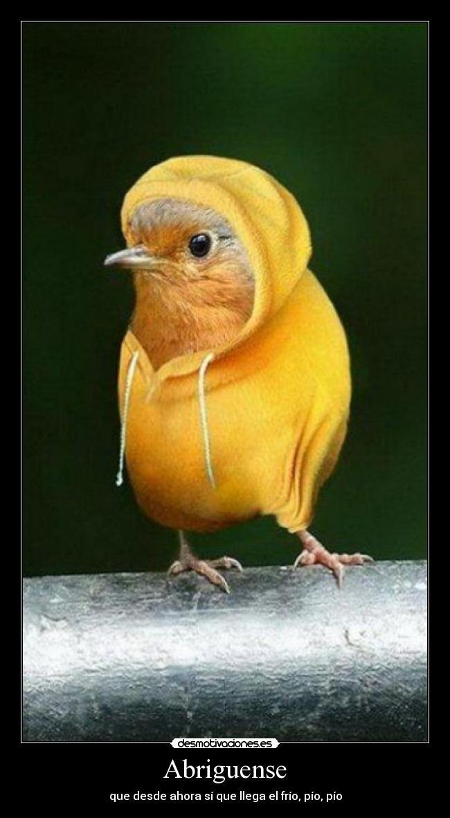 4e52ebff89 carteles abrigo bufanda que llega frio pio pio desmotivaciones
