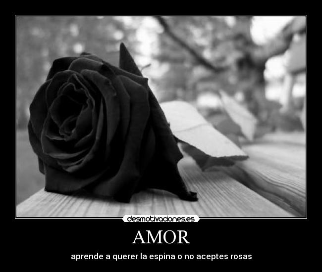 AMOR - aprende a querer la espina o no aceptes rosas