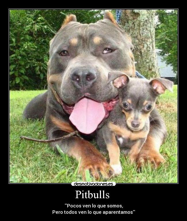 La realidad del pitbull (desmotivaciones,fotos y mas) - Taringa!