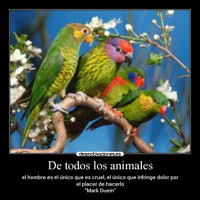 De todos los animales | Desmotivaciones