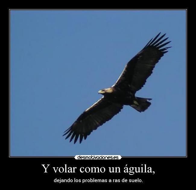 Y Volar Como Un águila Desmotivaciones