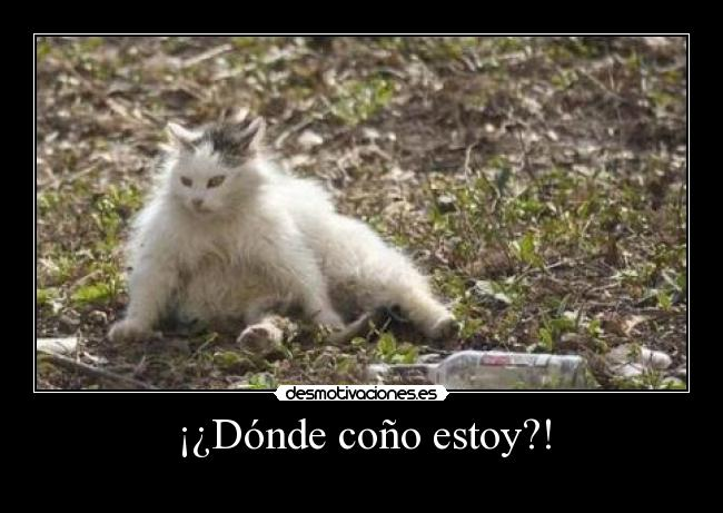 Dnde coo estoy?! - 