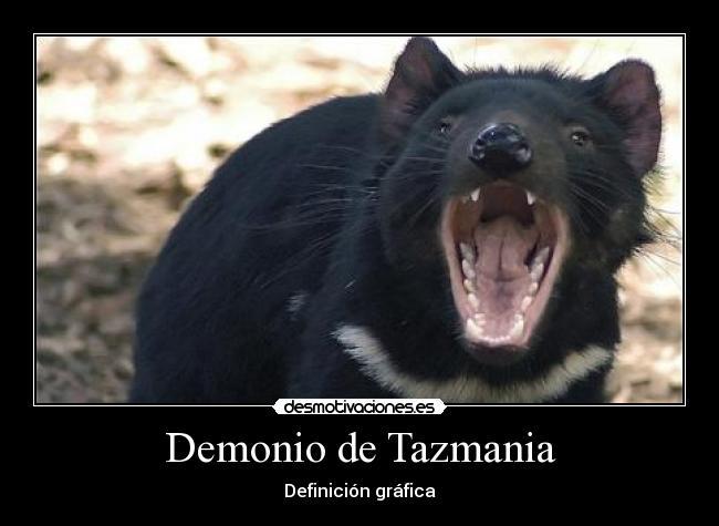 Demonio de Tazmania Triste Carteles Demonio Tazmania