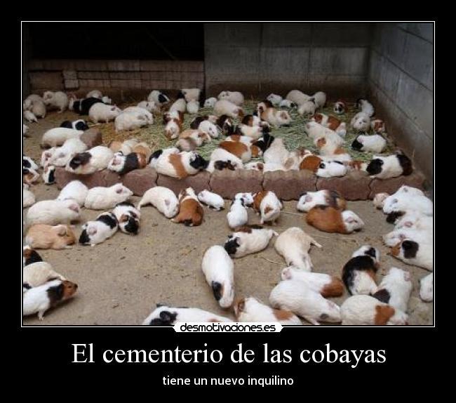 El cementerio de las cobayas desmotivaciones - Informacion de cobayas ...