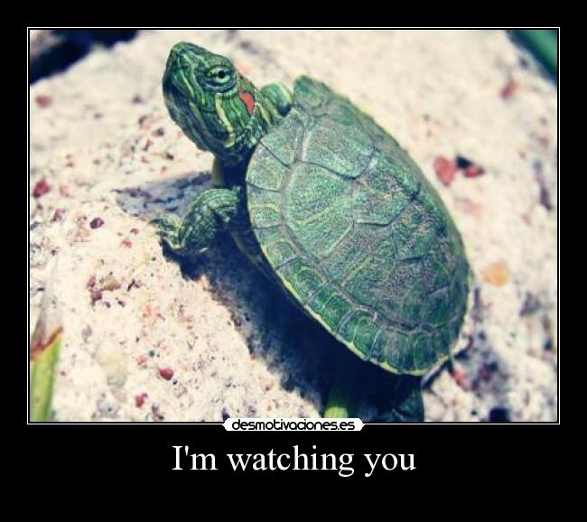 Im watching you -