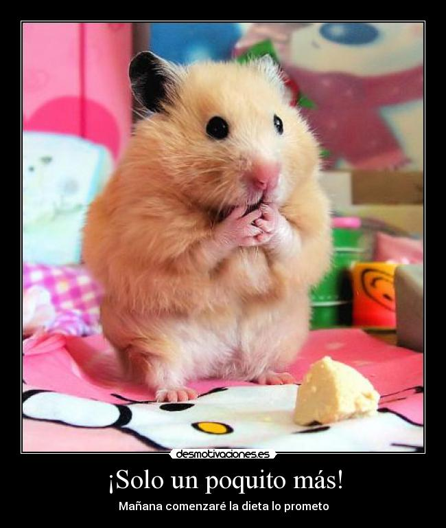 funny hamster pictures for kids - photo #4