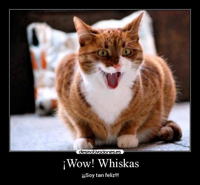 ¡Wow! Whiskas - ¡¡¡Soy tan feliz!!!