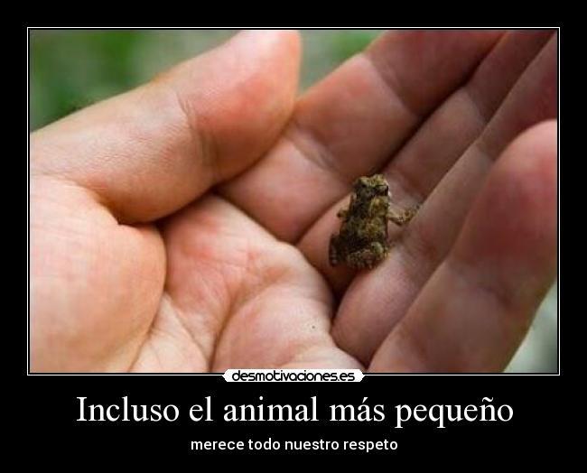 Incluso El Animal M S Peque O Desmotivaciones