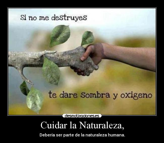 Carteles sobre como cuidar la naturaleza imagui - Como cuidar las hortensias de exterior ...