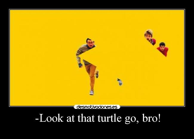 -Look at that turtle go, bro! -