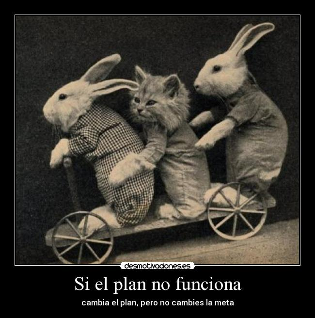 carteles cats and rabbits desmotivaciones