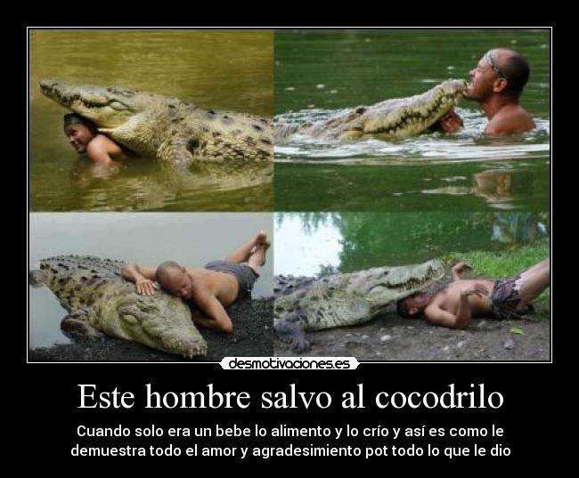 Garza robndose el bebe de un cocodrilo DOGGUIE