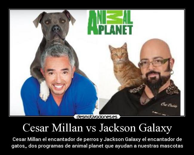 Cesar Millan El Encantador De Perros   Dog Breeds Picture
