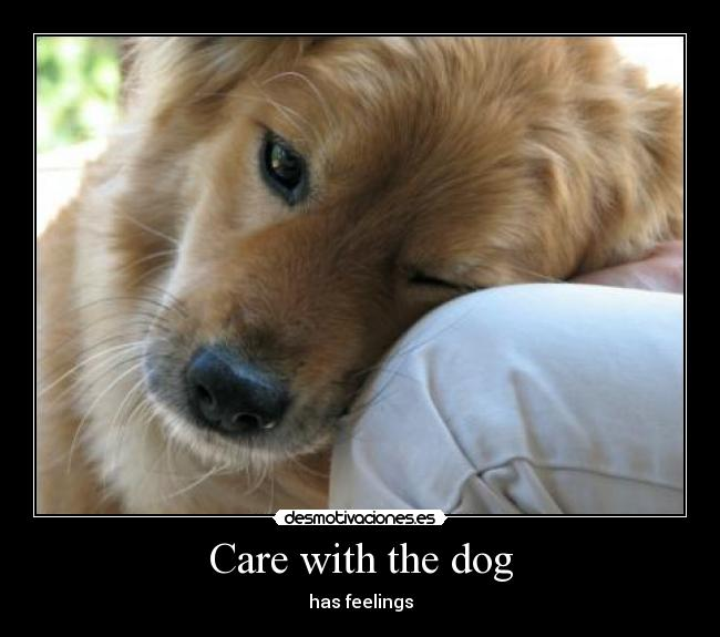 Care with the dog - has feelings
