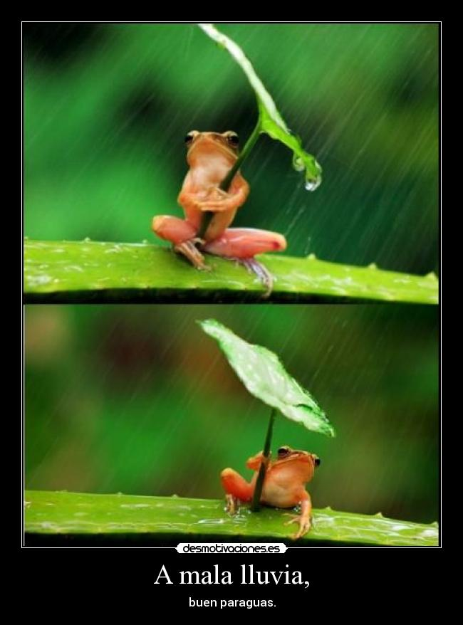 A mala lluvia, - buen paraguas.