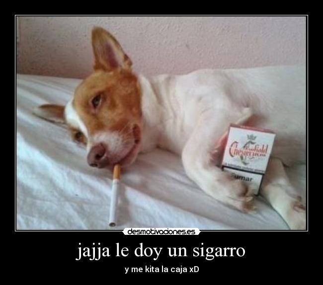 http://img.desmotivaciones.es/201307/sigarro.jpg
