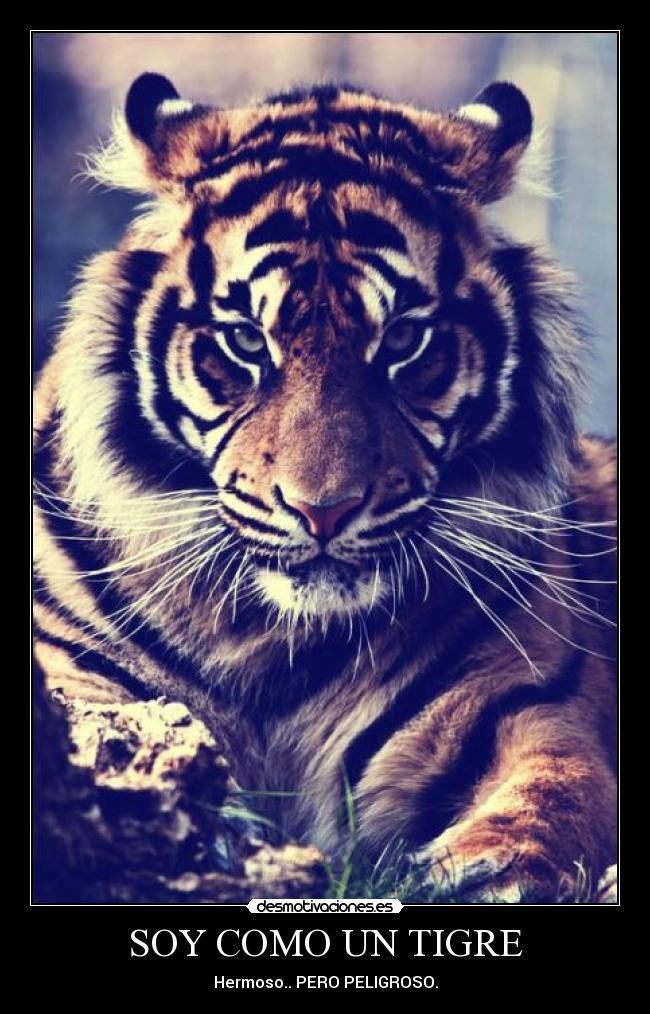 Soy Como Un Tigre Desmotivaciones