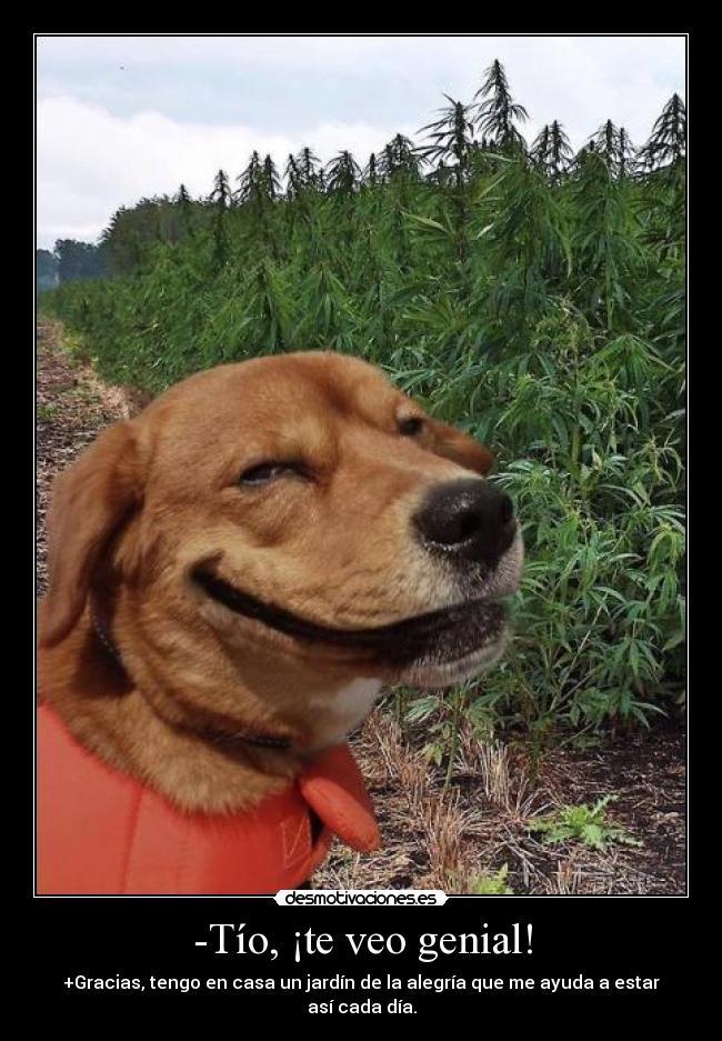 carteles perro drogas marihuana ejercitodemar rams desmotivaciones