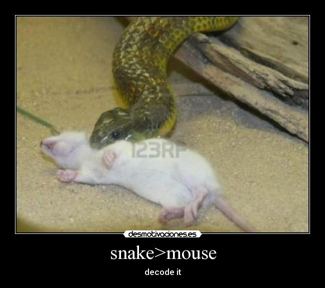 snake>mouse - decode it