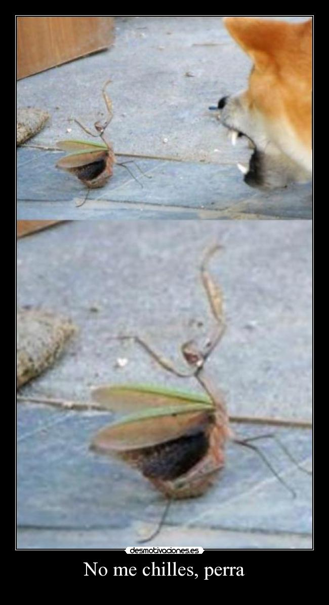 carteles mantis religiosa perra discutiendo chilles aint nobody got time for that desmotivaciones