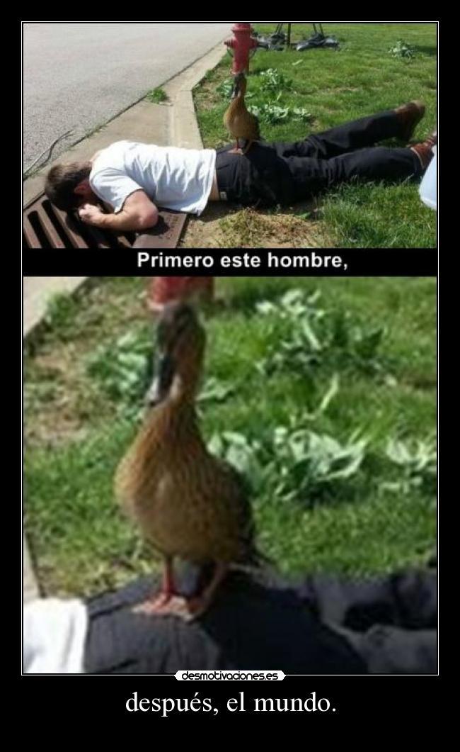 http://img.desmotivaciones.es/201308/pato.jpg
