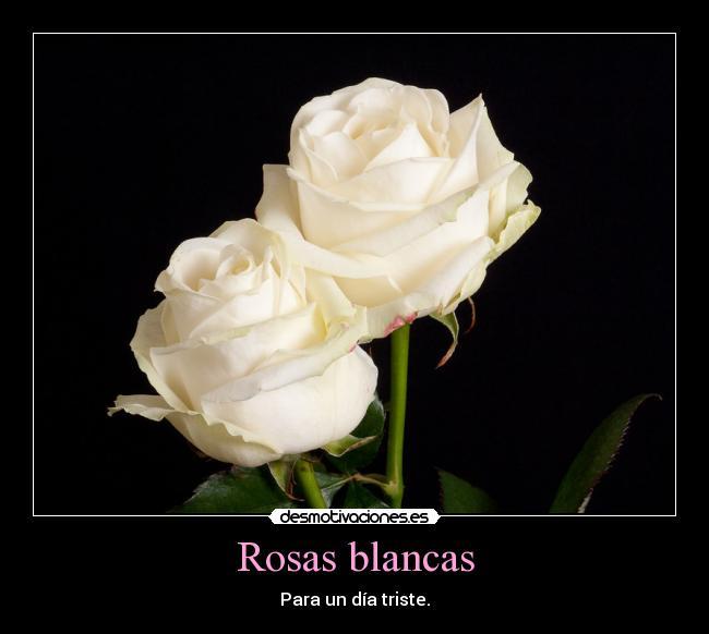 HASTA SIEMPRE MI QUERIDA CONCHITAFRANCE.... Rosasblancas