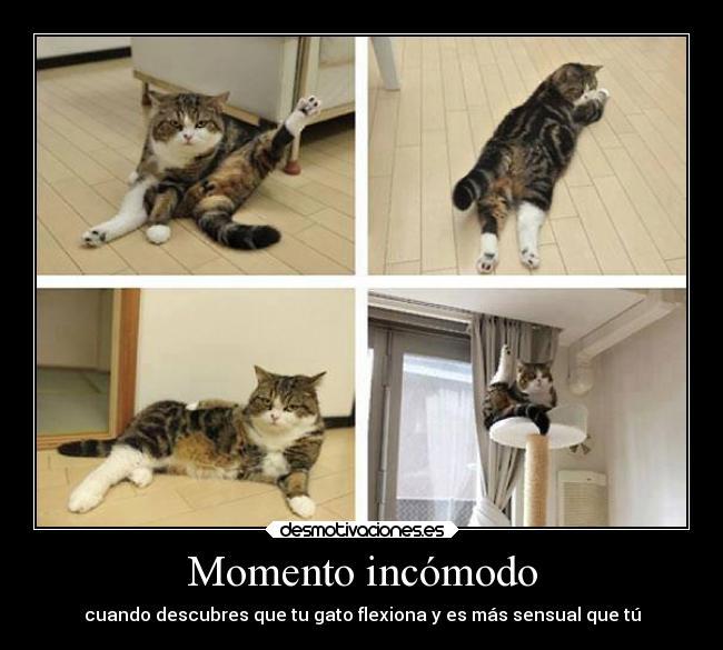 Momento incómodo carteles humor ll la pose pose ll  vida gato desmotivaciones