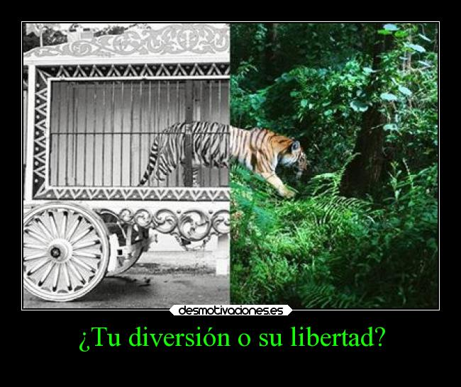 http://img.desmotivaciones.es/201311/Tudiversi%5Bonosulibertad.jpg