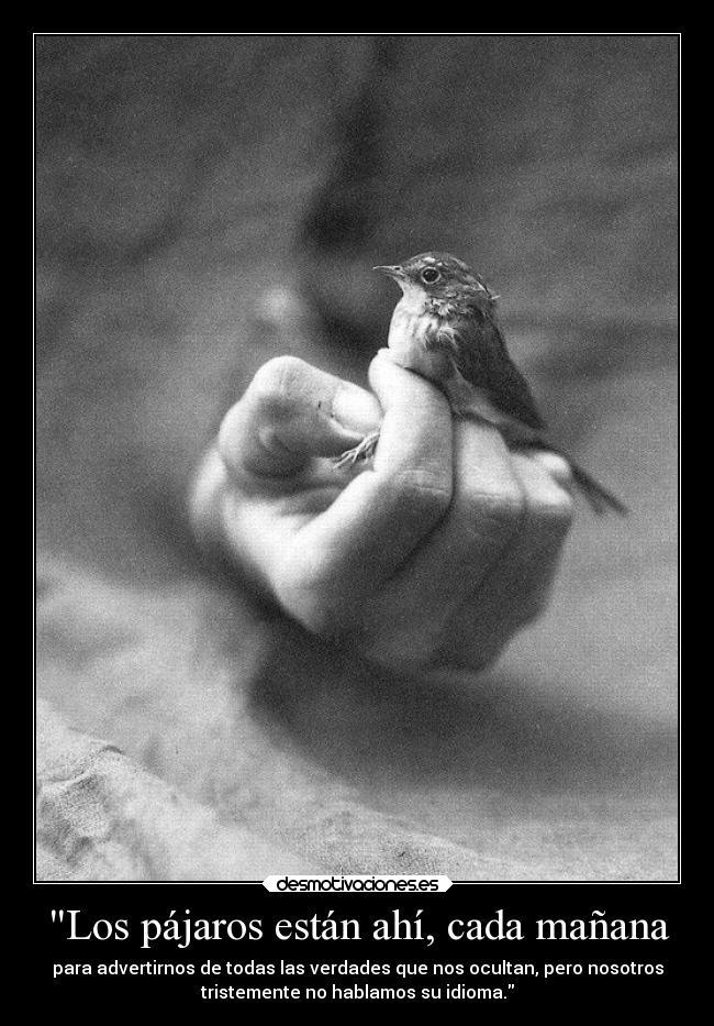 Los Pájaros Están Ahí Cada Mañana Desmotivaciones