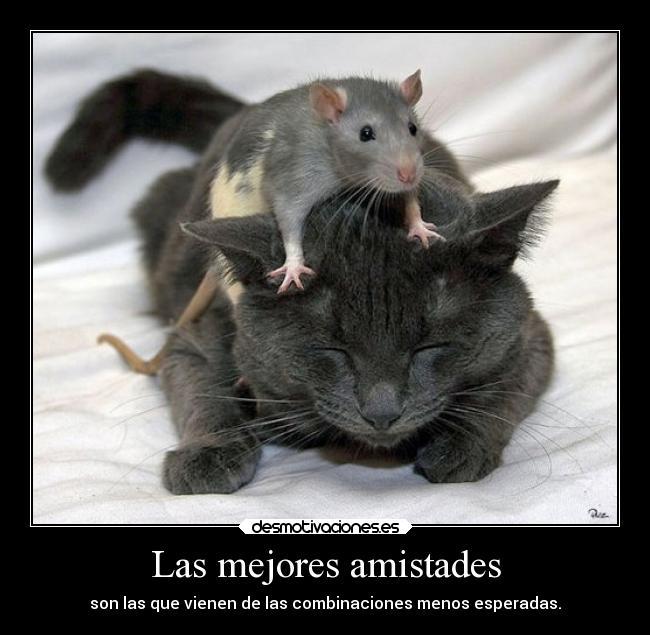 Usuario ui qui orra desmotivaciones - Cazar ratones en casa ...