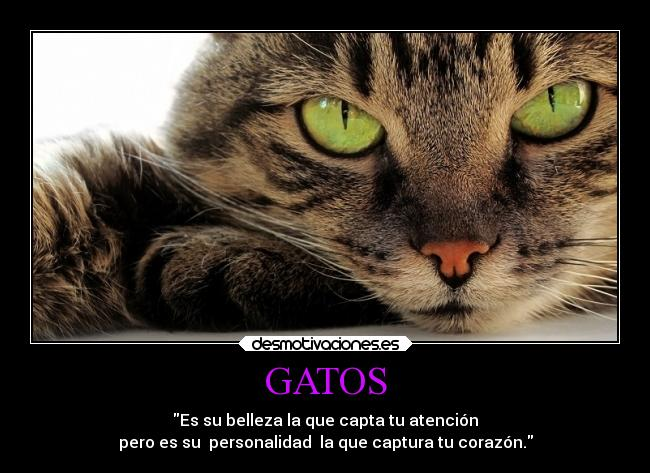 Gatos Desmotivaciones
