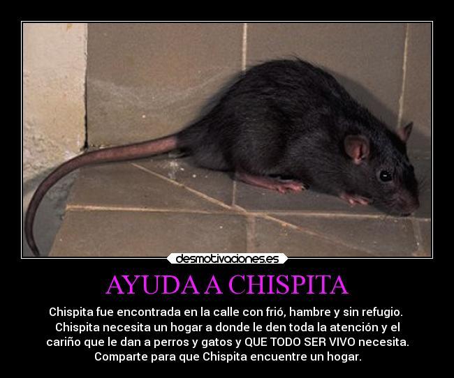 trampas casera para ratas