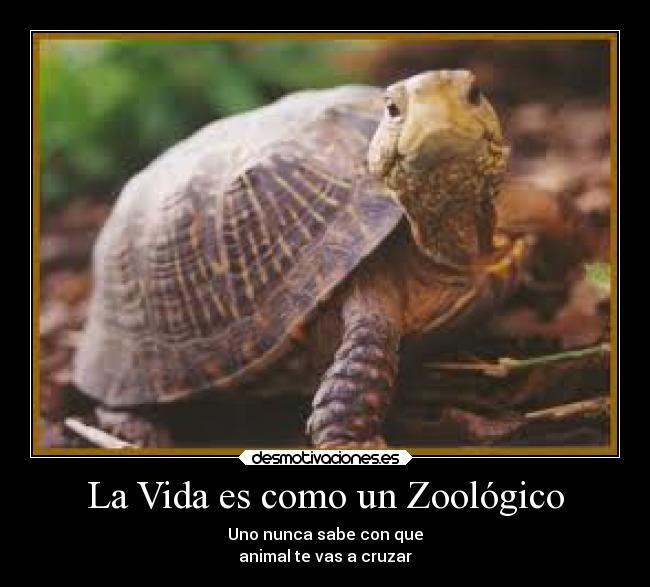 La Vida Es Como Un Zoológico Desmotivaciones