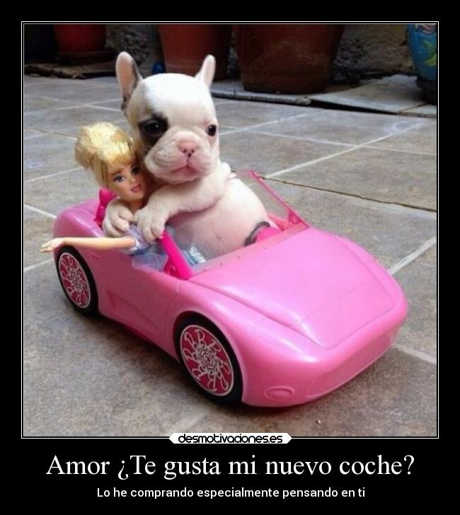 Pin Amor De Cachorro Husky On Pinterest